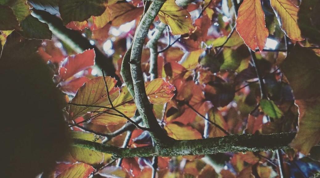 sinnemanie_lake_district_21_july_2017_when_I_am_under_the_tree_thinking